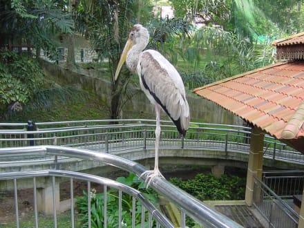 Bewohner im Bird Park - Kuala Lumpur Vogelpark