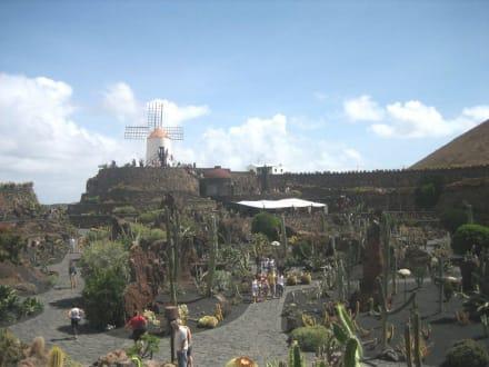 Ein erster Überblick - Jardin de Cactus / Kaktusgarten Guatiza