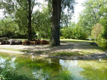 Banteng Anlage - Tierpark Hellabrunn