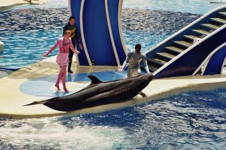 Delfin und Wal Show - Sea World
