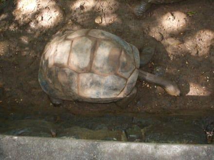 Schildkröte oder Giraffe?! - Casela Bird Park