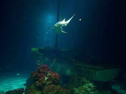 Im Ozeanaquarium - Aquarium Burg