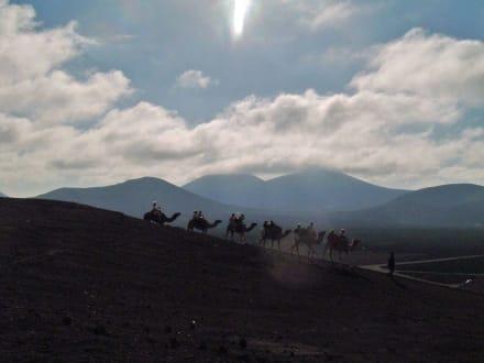 Dromedarritt in den Feuerbergen - Nationalpark Timanfaya (Feuerberge)