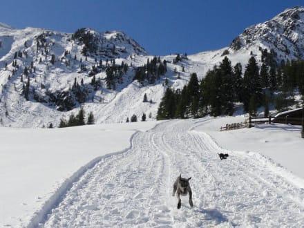 Lebensfreude pur - Ski-Gebiet Speikboden