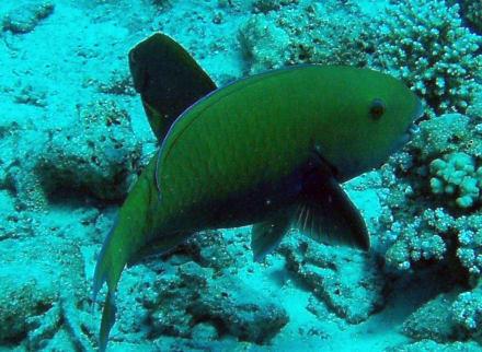 Gotha Abu Ramada - Jasmin Diving Center