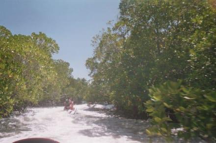 Mit dem Jetski durch die Mangroven - Jetski Wet & Wild Diani Beach (geschlossen)