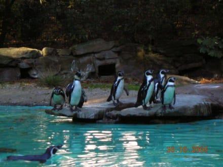 Pinguine im Zoo Dortmund - Zoo Dortmund