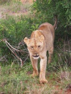 Safari - Tsavo Ost und West Safari