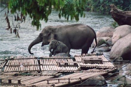 Babyelefant mit Mutter im Elefantencamp nördlich von Chiang - Elefantenreiten Chiang Mai