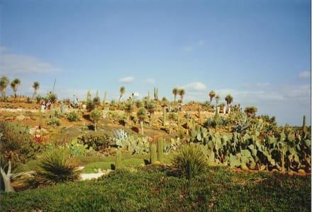 Botanischer Garten - Botanischer Garten Botanicactus Ses Salines