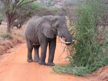 Elefant - Tsavo West Nationalpark