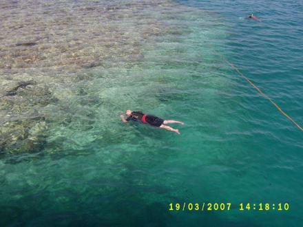 Herrliche Unterwasserwelt - New Son Bijou Diving Center