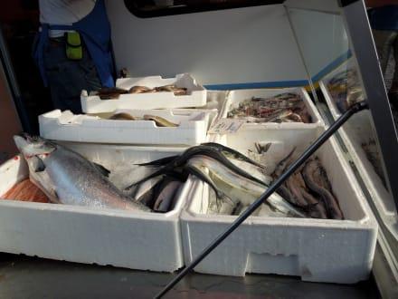 Fische sind eine Seltenheit - Hamburger Fischmarkt