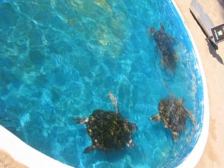 Kleine Flotte  - Meeresschildkrötenstation Projeto Tamar