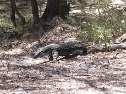 Besucher beim Lunch am Shelly Beach - Myall Lakes Nationalpark