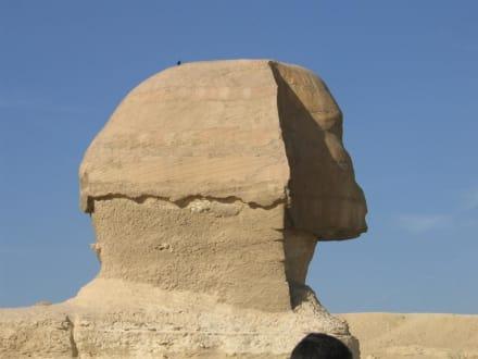 Der Sphinx - Sphinx von Gizeh