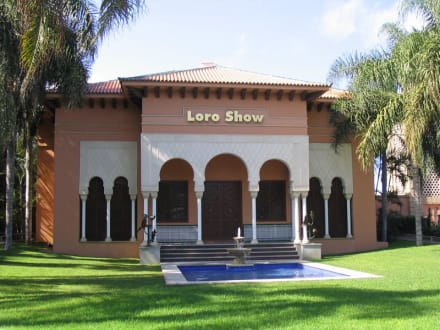 Loro Show im Loro Parque - Loro Parque
