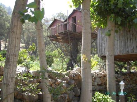 Tree Houses - Olympus Tree Houses