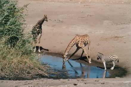 Wasserloch - Etosha Nationalpark