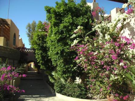Schön angelegt - Ausflug nach El Gouna