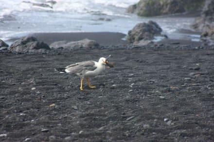 Möwe hatte einen Fisch aus dem Meer gefangen. - Playa Jardín