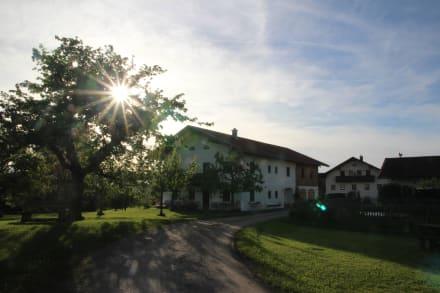 Blick auf den Lohner-Hof - Bauernhof Lohner-Hof
