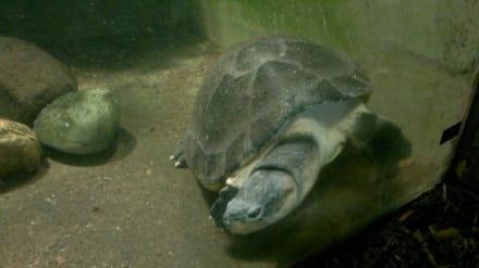 Naturreservat/Zoo - Zoo Brno