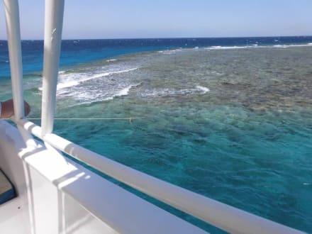 Alleine am Riff, gleich geht´s schnorcheln - Delfinausflug mit Mo