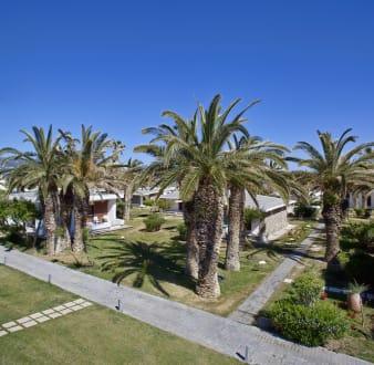 Garden - Palm Trees -