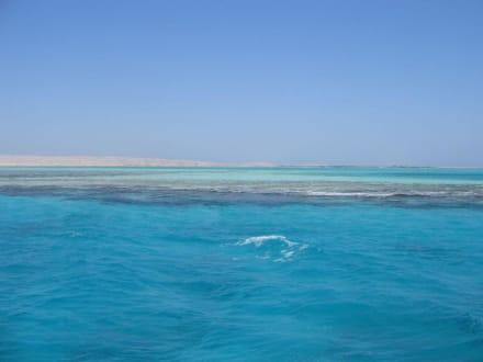 Giftun Inseln - Tauchkreuzfahrt