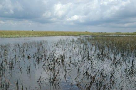 Everglades - Gator Park