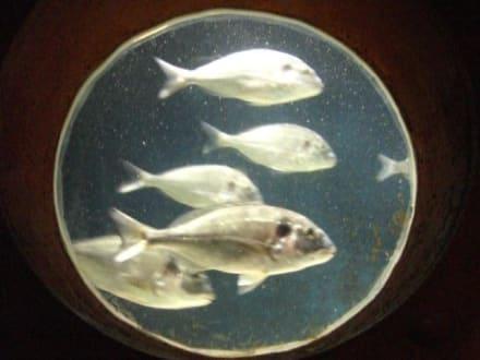 SEea-Life / Aqua-Dom - Sea Life Center & Aquadome
