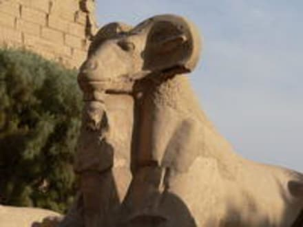 Cryosphinx - Amonstempel Karnak