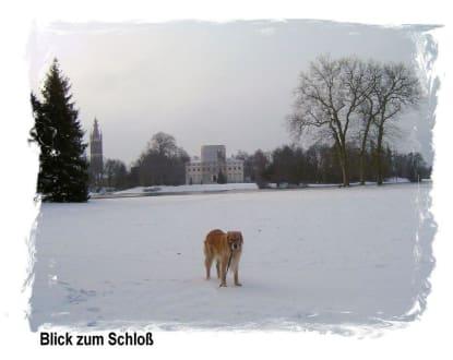 Wörlitz im Winter - Wörlitzer Park