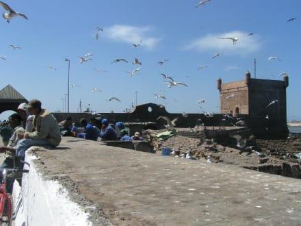 Essaouira: Hafen, Möven, Wind - Hafen Essaouira