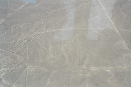 der condor - Nazca-Linien