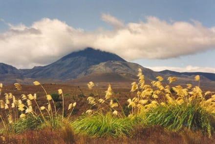 Mount Ngauruhoe - Turangi & Tongariro Crossing im Tongariro National Park