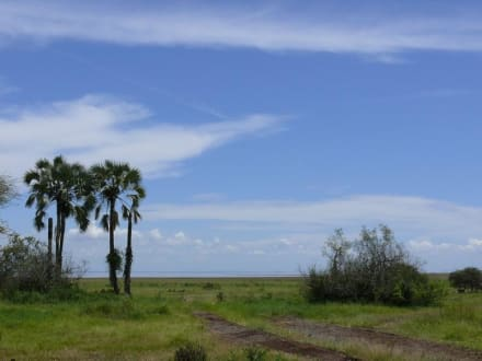 Landschaft im Lake Manyara NP - Lake Manyara Nationalpark