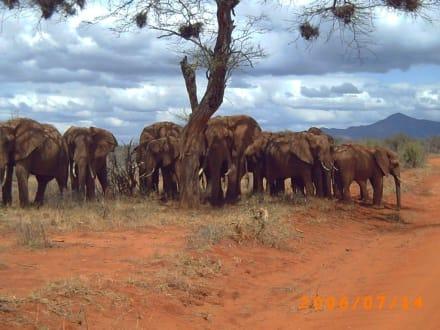 Elefantengruppe mit Babys - Tsavo Ost und West Safari
