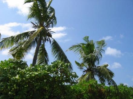 Palmen - Mopedausflug