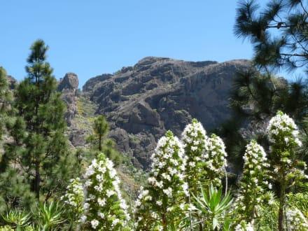 Wilde Blüten - Pico de las Nieves