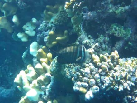 Schöne Korallen - Geführte Touren Hamata Mangroves