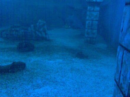 Die Unterwasserwelt - Meeresaquarium