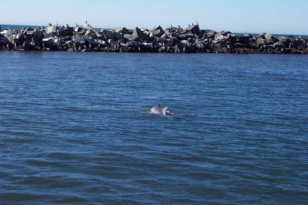 Die Koombana Bay - Delfin Tour Bunbury