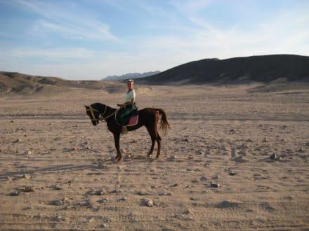 Reitausflug in die Wüste - Reiten Safaga