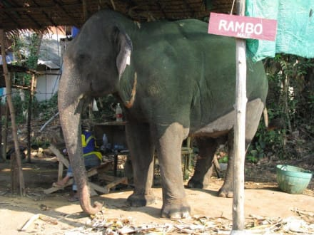 Elefanten Camp Koh Chang Thailand - Elefantenreiten Klong Phrao Beach