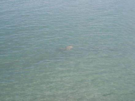 Schildkröten - Bootstour Side