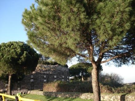 Casal Rotondo - Archeobus Tour
