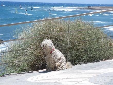 Aussicht vom Restaurant - Centro Internacional de Windsurfing