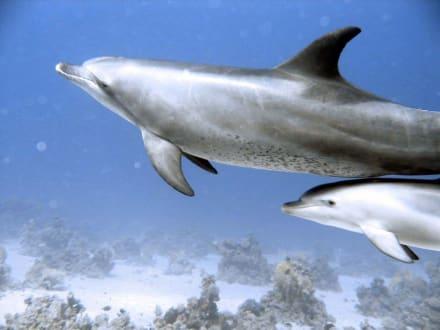 Delfine - Adventurer-Diving (geschlossen)